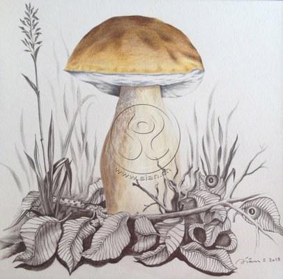 *steinpilz* farbstift & bleistift auf papier, 26/26 cm
